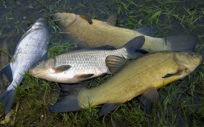 Horgász verseny