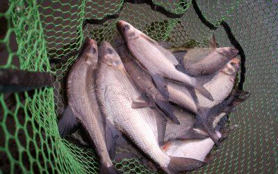 Nyílt nevezésű horgászverseny-2020.06.20